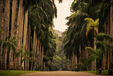 Sri Lanka: alley of palms in Royal Botanic Gardens, Kandy
