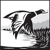Monochrome illustration with flying wild duck over the water