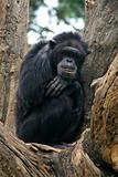 Gorilla Watching
