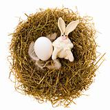 Easter rabbit in a nest