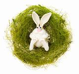 White rabbit in a green nest