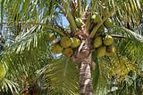 Palm Tree Produce