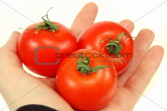 tomatoes in hand