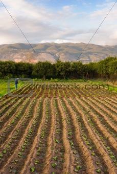 Small farm with lone farmer
