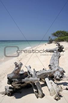 cagayan driftwood