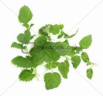 lemon balm on white