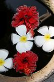 Fragapani and hibiscus