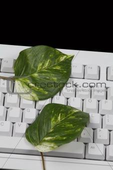 Green Computing Keyboard