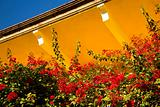 Red Bouganvillia Yellow Adobe Roof Mexico