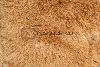 Brown fur background texture