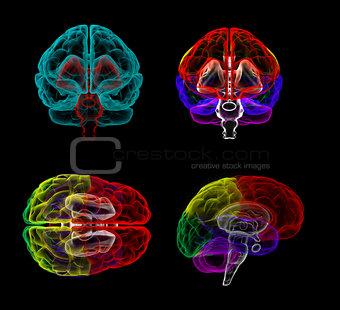 3d rendering  human of the  brain