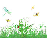 Bee, Dragonfly, Ladybug, on meadow, white background