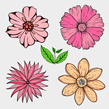 Vector set of hand drawn colorful flowers and leaf branch. illustration isolated on grey