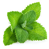 Fresh leaf mint green herbs ingredient