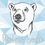 Polar bear vector illustration