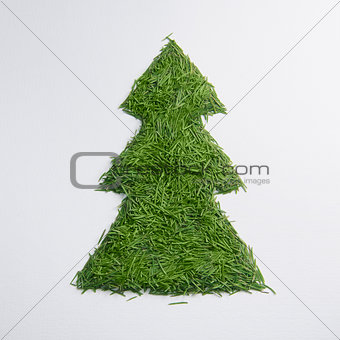 Green tree of the needles