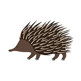 Echidna. Flat cartoon vector illustration