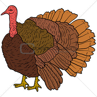 Sketch black turkey on a white background. Vector illustration.
