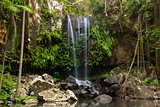 Curtis Falls Waterfall in Mount Tambourine