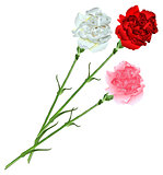 Bouquet of white, pink and red carnations