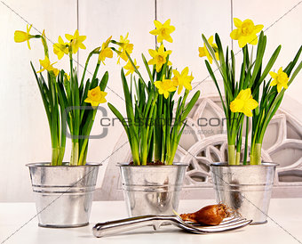Pots of daffodils on table