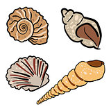 Set of hand drawn seashells