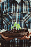 Garden seedling in farmer's hands