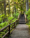 Wooden staircase on a hiking trail