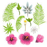 Set of exotic tropical flowers and palm leaves.
