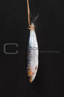 Fresh anchovy fish hanging.