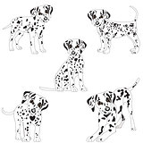 Dalmatians, cute, sad. Vector Illustration Portrait of Dalmatian Puppy. Dog isolated.