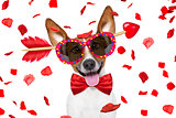 crazy in love valentines dog