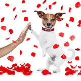 valentines dog in love with high five paw