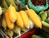 Fresh corn on the morning chinese market in Yangon, Myanmar
