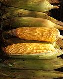 Fresh corn on the morning chinese market in Yangon, Myanmar