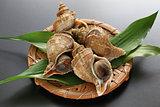 tsubu gai, ezo neptune, japanese whelk, neptunea polycostata scarlato
