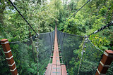 Top tree walking bridge