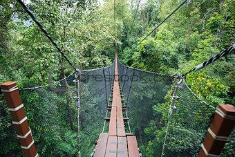 Top tree walking bridge