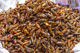 roasted insects local street food Yangon Myanmar