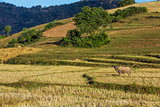 fields landscaped Shan state Myanmar