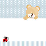 Teddy bear and ladybird background