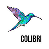 Hand drawn sapphire hummingbird, colorful sketch style vector illustration