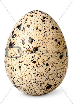 Single quail egg vertical