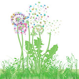 Dandelion in the meadow illustration