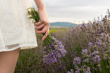 On lavender field girl in dress holding bouquet