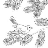 Bird Titmouse on Pine Branch, Contours