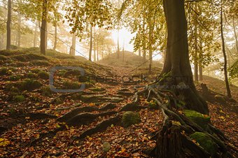 Autumn forest with fog