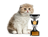 Highland Fold kitten with a trophy isolated on white