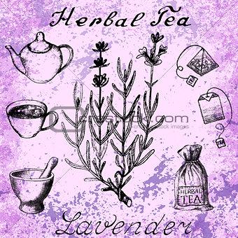 Lavender hand drawn sketch botanical illustration
