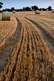 Bales of straw in field